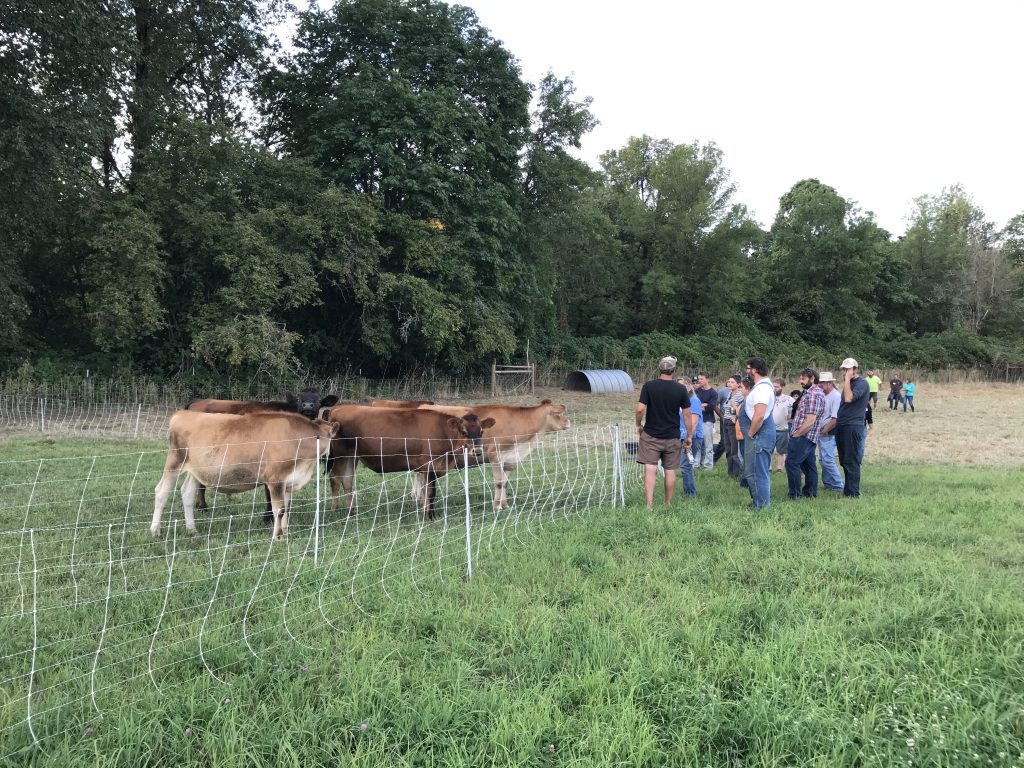 People looking at cows in a pasture