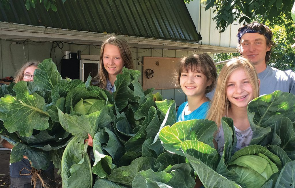 In the cabbage patch at Geercrest Farm